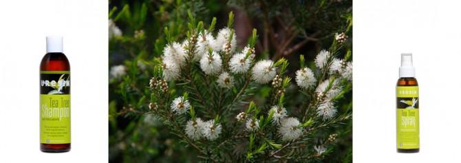 Champú del árbol del té de Uresim